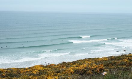 Surfing and Palm Trees in Cornwall