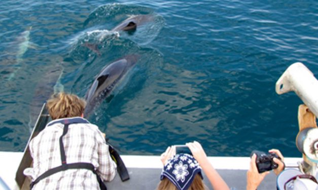 National Whale and Dolphin Watch