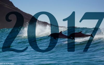 Our SurfGirl Year In Review 2017