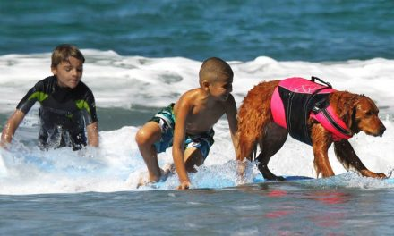 Surf dog raises $500,000 for charity