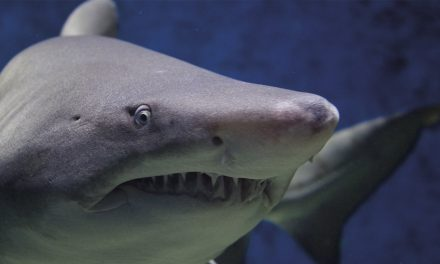 Laird blames periods for shark attacks…