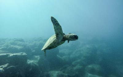 10 Thought Provoking Ocean Movies